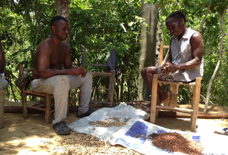 Evaluation de projet d'Agroforesterie en Haïti