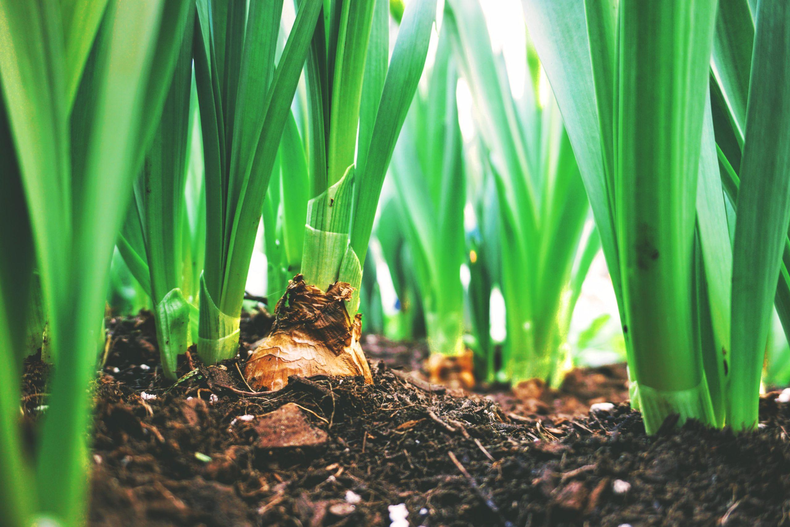 Diagnostic du système national de formation professionelle agricole de RCA